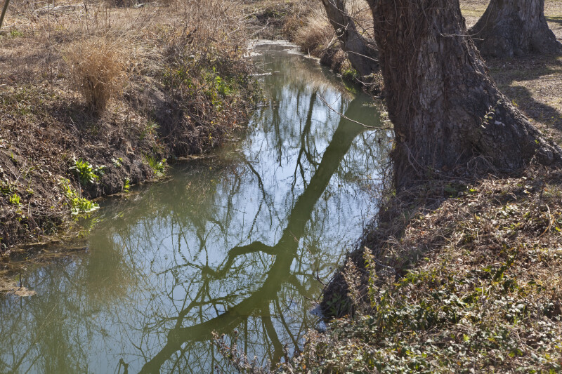Tree Branches Reflected in the acequia madre at the Espada Acequia.