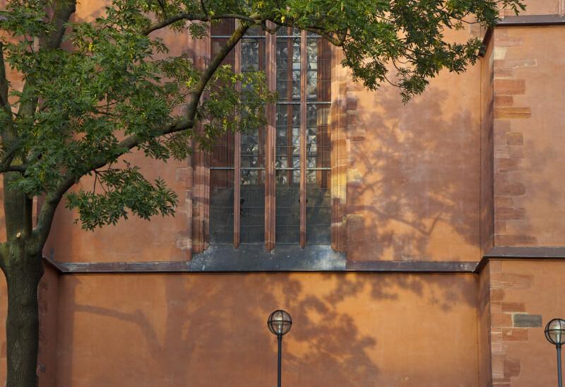 Tree by Saint Bartholomeus's Cathedral