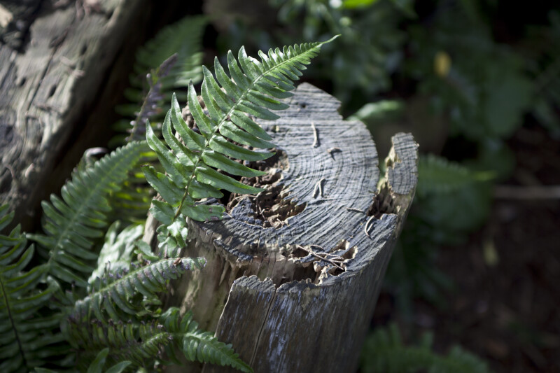 Tree Fern Leaves Near Stump