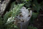 Tree Fern Leaves Near Stump