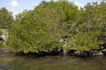 Tree Growing Near Water at Biscayne National Park