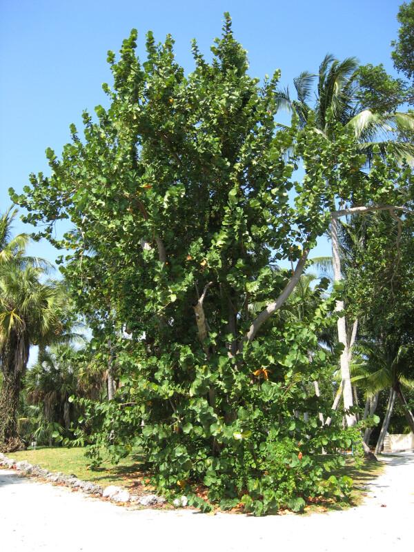 Tree in Corner