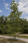 Tree Near Dirt Path