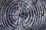 Tree Rings in Post