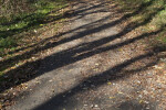Tree Shadows and Fallen Leaves on an Asphalt Path at Evergreen Park