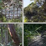 Tree Snail Hammock photographs