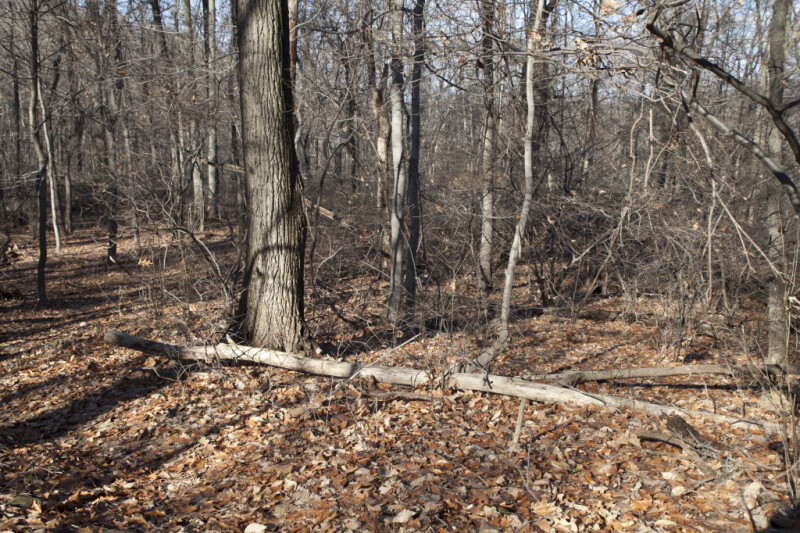 Tree Trunks, Branches, and Fallen Leaves at Boyce Park
