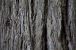 Tree Uneven Bark