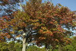 Tree with Red and Green Leaves During Fall