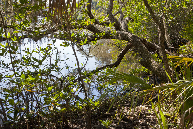 Trees along the Banks of South Creek