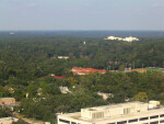Trees and Buildings in Tallahassee