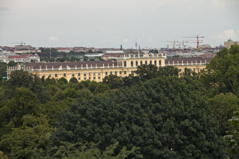 Trees and Buildings in Vienna, Austria