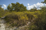 Trees and Shrubs at Biscayne National Park
