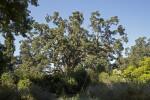 Trees and Shrubs at Sacramento Zoo