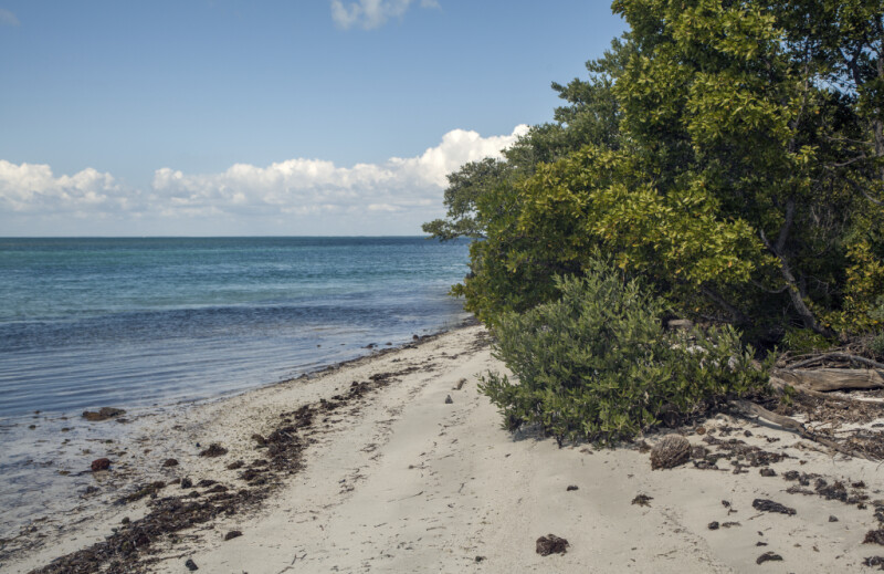 Trees and Shrubs on Shore of Biscayne National Park