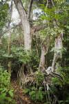 Trees and Vegetation Along Gumbo Limbo Trail