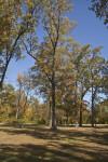 Trees at Corinth Contraband Camp