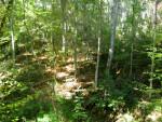 Trees at Devil's Millhopper