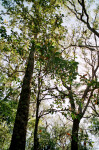 Trees at Fort Caroline Natural Trail