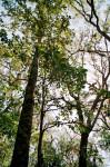Trees at Fort Caroline Natural Trail