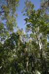 Trees at Mahogany Hammock
