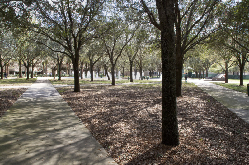 Trees casting shadows around the Martin Luther King Jr. Plaza at the Unversity of South Florida.