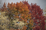 Trees During Fall at Evergreen Park