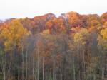 Trees During the Autumn Season
