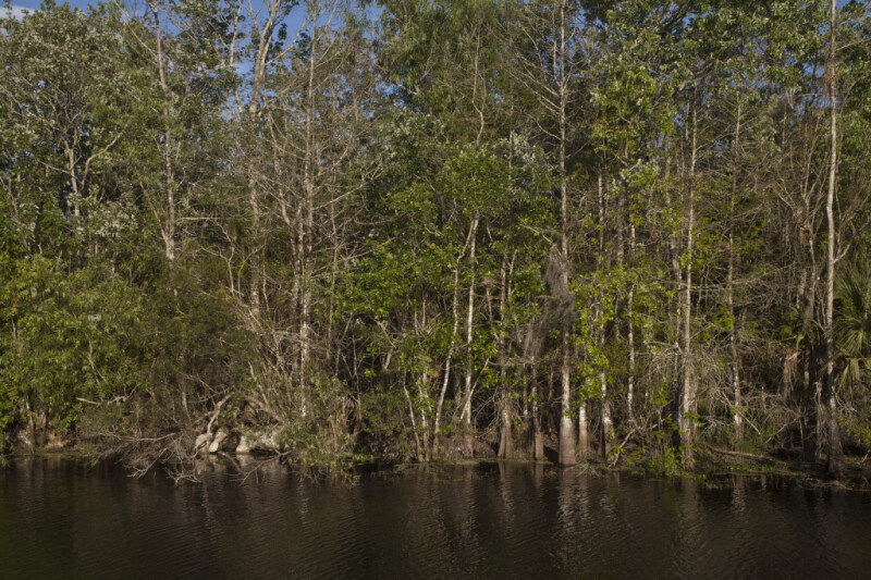 Trees on Bank of Waterway at Big Cypress National Preserve