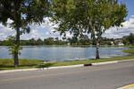 Trees on Lakeside
