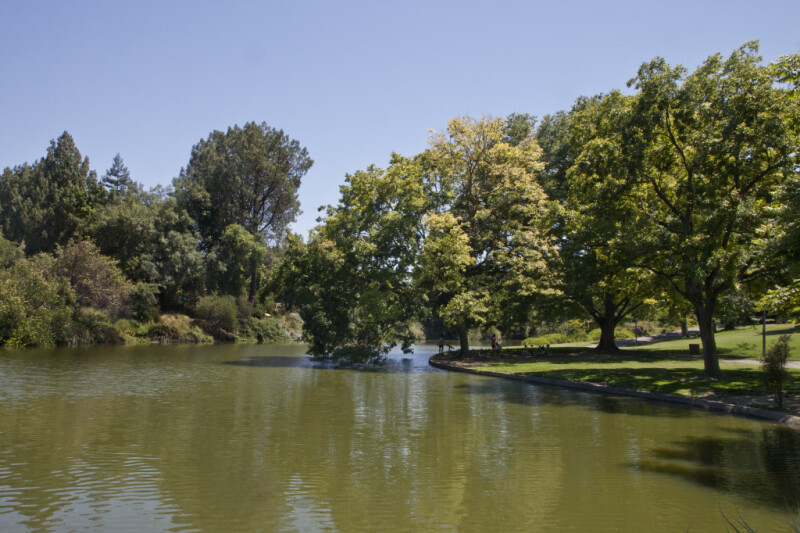 Trees Rooted near a Pond at the UC Davis Arboretum