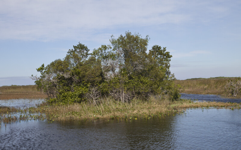 Trees, Sawgrass, and Water Liles