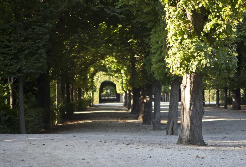 Trees Shading Path