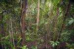 Trees, Shrubs, and Ferns Along Gumbo Limbo Trail