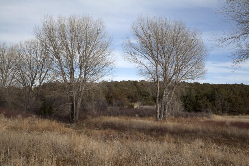 Trees, Shrubs, and Grasses at The Quarai Ruins