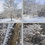 Trees photographs