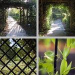 Trellises photographs
