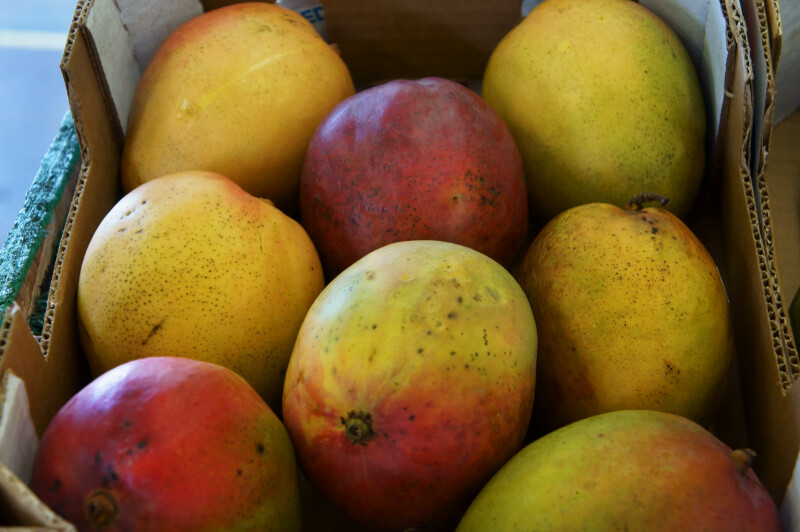 Tropical Brazil Mangoes at the Tampa Bay Farmers Markets