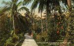 Tropical Foliage at the Entrance to the Garden of Eden
