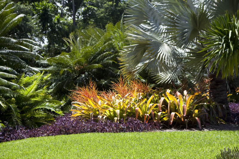 Tropical landscape pictures joy studio design gallery for Tropical garden design