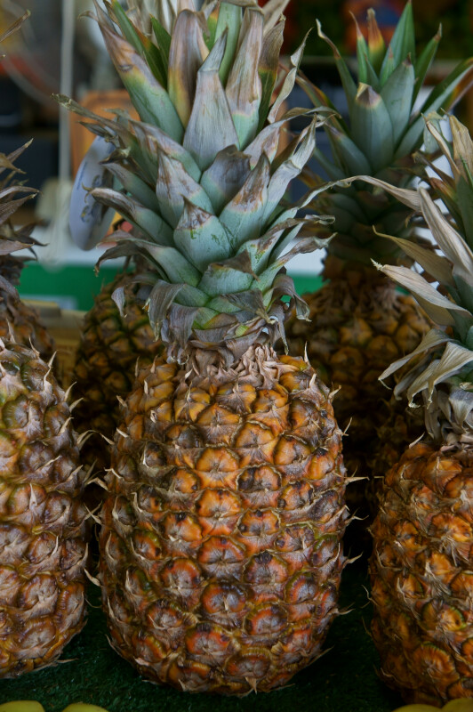 Tropical Pineapple at the Tampa Bay Farmers Market