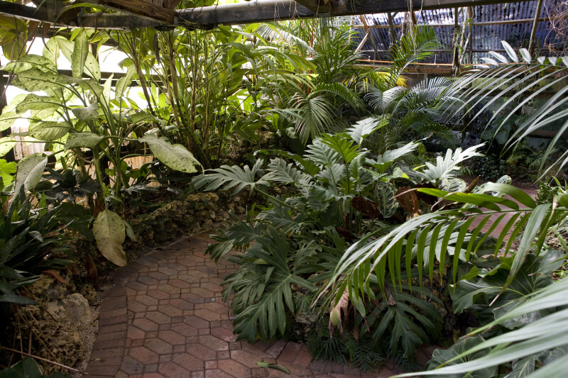 Tropical Plant House