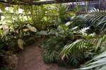 Tropical Plant House