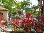 Tropical Plants and Railing