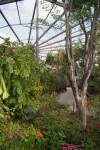 Tropical Rain Forest Aviary
