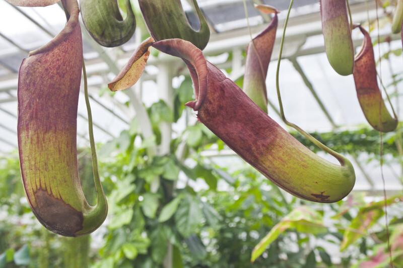 Tubular Flowers