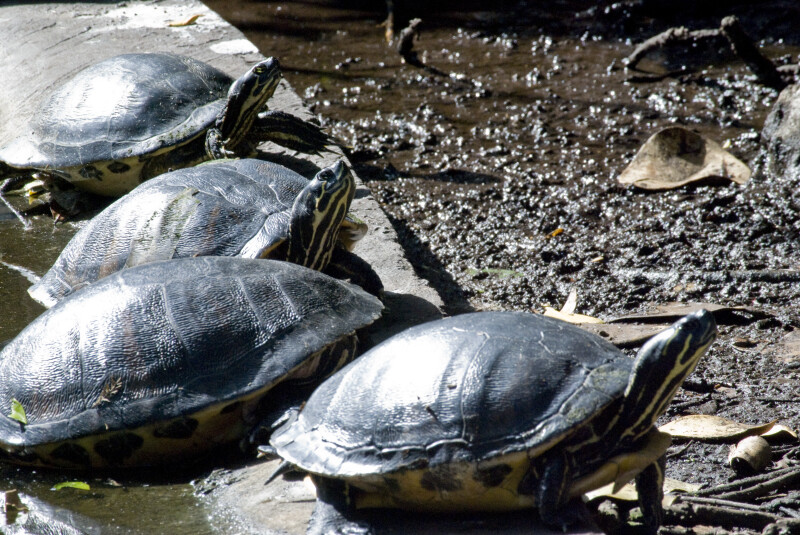 Turtles on Shore