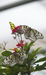 Two Butterflies and a Plant