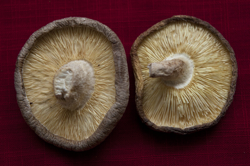 Two Dried Shitake Mushrooms