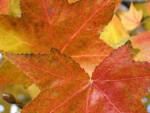Two Greenish-Orange Leaves
